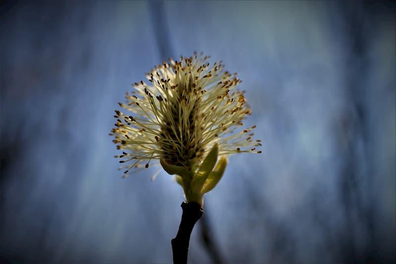 Les solutions naturelles existent pour prévenir et soulager les allergies