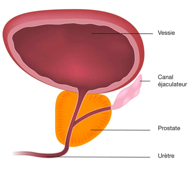Prostate et testostérone, en prendre soin